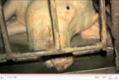 Animals Australia Ad Anti Factory Farming Ad Campaign