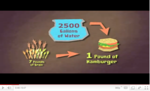The Secret Life of Beef: A Documentary Short That Reveals The Real Costs Hidden Between the Bun