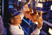 food safety inspector