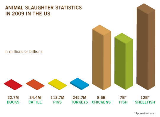 killing animals for food This paper discusses the ethics of killing animals for food by looking at current practices of conventional and halal slaughter in egypt and in the uk it addresses the role of animal science (with.