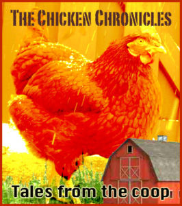 The Chicken Chronicles is an ongoing series of personal stories about chickens and the people that love them. Do you have a story to share? Please let us know!