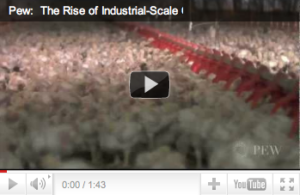 PEW Report: Chicken Industry Grows 1400% in Less Than 60 Years