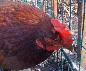 All about Eggs: Free from Harm's Collection