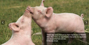 Beyond the Struggle to Survive: The Study of Pleasure in Animals