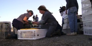 Biggest Animal Rescue Effort in California History – A Must See Video!