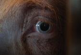 Facing Animals Movie Poster
