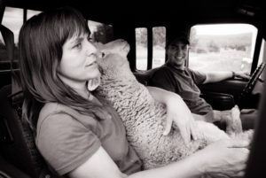 Photo Gallery: Highlights from the We Animals Project by Photojournalist Jo-Anne McArthur