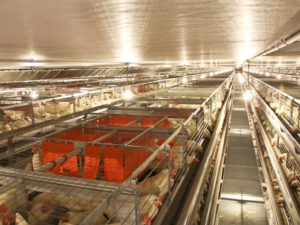 Proposed Legislation for Egg-Laying Hens: An Update