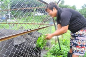 This Little Piggy Did Not Go to Market and Instead Changed A Pig Farmer's Life