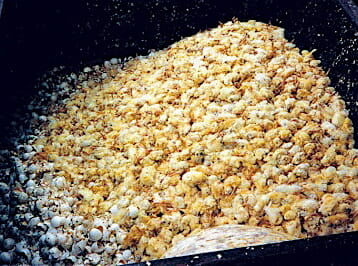 photo of male chicks discarded in a hatchery