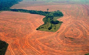 photo of soy fields in what was a rainforest