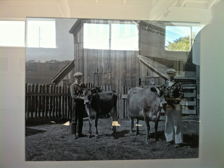 Marin County Farming pioneers