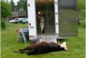 mobile slaughterhouse photo