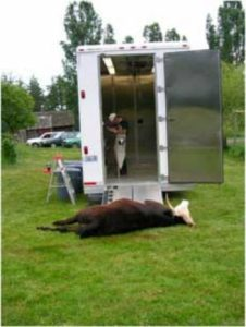 The Mobile Slaughterhouse: The Locavore's Answer to Decentralizing Death
