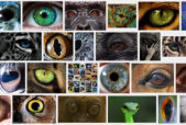 eyes_collage