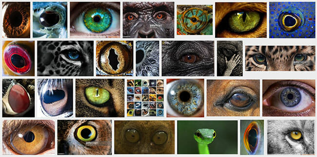 eyes of animals and humans collage
