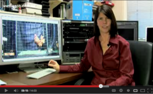 Video: Bird Brain? Thanks! I'll Take that as a Highly Evolved Compliment