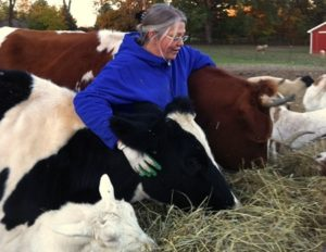 rebecca stuckl with cows and goats