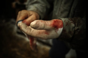 Photo by Francesco Scipioni at friend's backyard pig slaughter in Italy