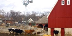 Wagner Farm: A Bucolic Facade Masks the Violence of Animal Agribusiness