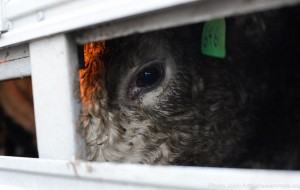 photo: Jo-Anne McArthur | weanimals.org