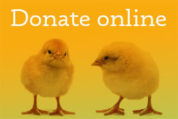 donate_online_button