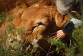 cow and human bond