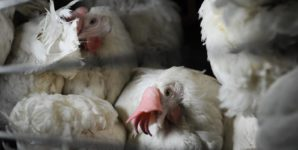 Rejecting the Egg Bill Means Rejecting Cages