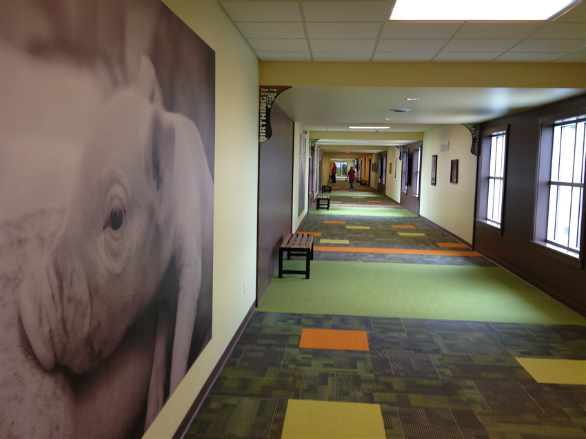 Pig Adventure's breeding facility is huge, like an airport with different terminals connected via long, carpeted corridors covered with loving images of piglets.