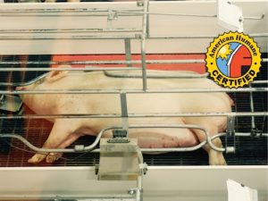 Fair Oaks Farms 'Pig Adventure,' The First Factory Farm Disneyland, Now a 'Humane Certified' Farm