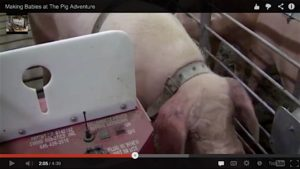 """Fair Oaks Farms: Selling Sexual Violation of Animals as """"The Miracle of Life"""""""