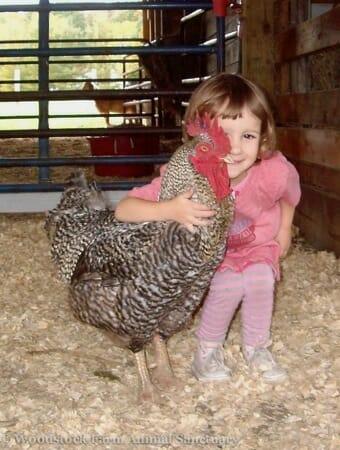 photo: Woodstock Farm Animal Sanctuary