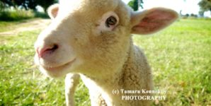 The Fluther Transversion: Awakening to An Animal Rights Epiphany
