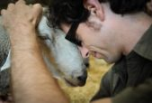 man hugging sheep