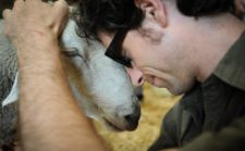 Sanctuaries Teach Us What Farms Can't