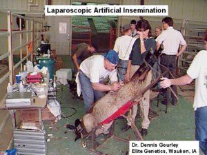 A Misplaced Concern Over Farmed Animal Extinction