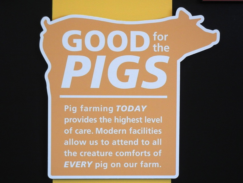 """Good for the pigs""—this was a message that was constantly repeated during my day at Pig Adventure: from the Grand Opening speeches in which the owners discussed their profound ""love and respect"" for the animals at Fair Oaks, to signs like this one insisting that all the needs and preferences of ""<em>EVERY</em> pig"" at Fair Oaks are met. Those words, ""all the creature comforts,"" played through my head again and again as I went on to observe the pigs."