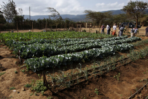 drip irrigation project, A Well Fed World