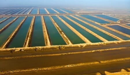 massive fish farm