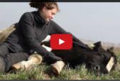 humane farming