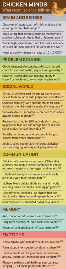 chicken behavior infographic