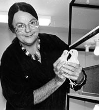Lesley Rogers, Emeritus Professor of Neuroscience at University of New England, has made outstanding contributions to understanding brain development and behavior. She discovered lateralization in the chick forebrain, when lateralization was still believed to be a unique feature of the human brain. Later it became known that hemispheric specialization is ubiquitous in the animal kingdom.