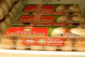 cage free eggs factory farming