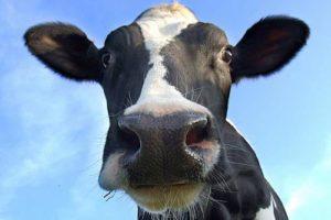 organic meat methane