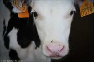"""On the Claim That """"Humane Meat"""" Leads to Veganism"""