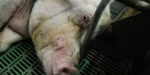 Animal Slavery and Other Comparisons: Who Should Be Offended?