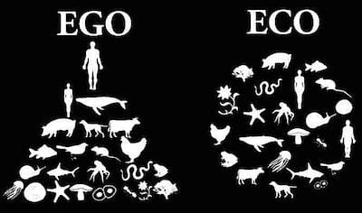food-chain-ego-vs-eco