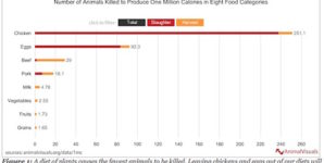 Comparing Animal Deaths in Production of Plant and Animal Foods