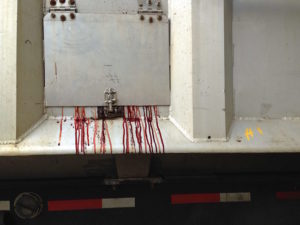Truck full of bloody skins. Photo: Louise Jorgensen / Toronto Cow Save