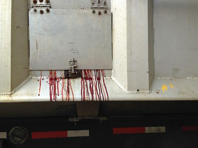 Truck full of bloody skins. Photo: Louise Jorgensen / Toronto Cow Save